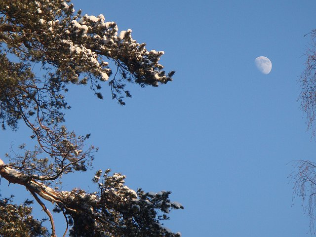 Луна в поселке Правдинском