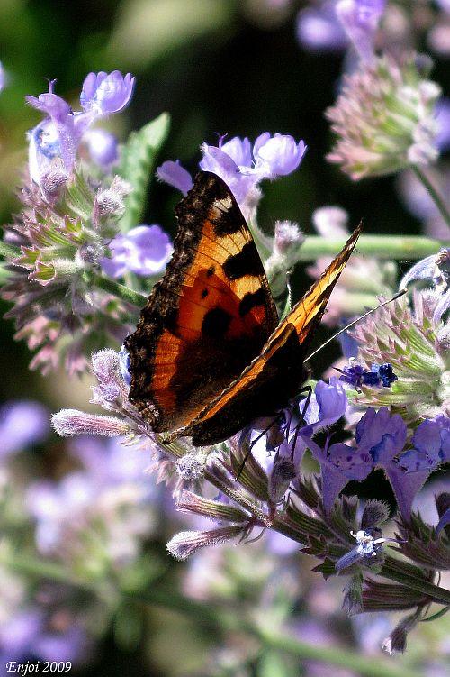 В этом году было достаточно бабочек
