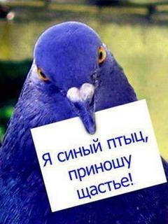 голуб